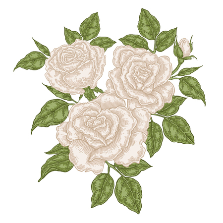 Hand drawn white roses flowers and leaves. Vintage floral composition. Spring garden flowers isolated. Vector illustration. 免版税图像 - 114801185