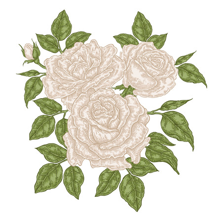 Hand drawn white roses flowers and leaves. Vintage floral composition. Spring garden flowers isolated. Vector illustration. 矢量图像