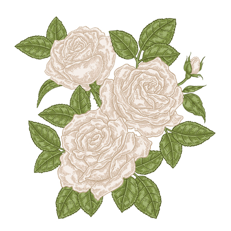 Hand drawn white roses flowers and leaves. Vintage floral composition. Spring garden flowers isolated. Vector illustration. 免版税图像 - 112373911