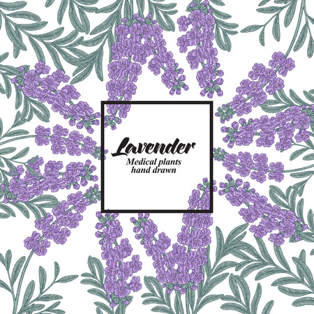 Hand drawn background with lavender flowers. Medical plants. Vector illustration. 免版税图像 - 109276597