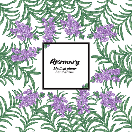 Hand drawn background with rosemary flowers and leaves. Medical plants. Vector illustration. 矢量图像