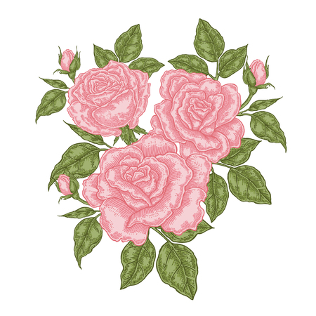 Bouquet of pink roses. Floral composition. Spring flowers isolated on white. Vintage vector illustration. 免版税图像 - 121948000
