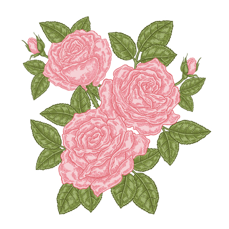 Bouquet of pink roses. Floral composition. Spring flowers isolated on white. Vintage vector illustration. 免版税图像 - 121948002