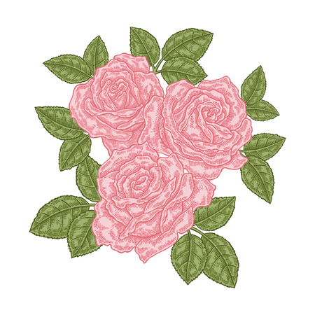 Bouquet of pink roses. Floral composition. Spring flowers isolated on white. Vintage vector illustration. 免版税图像 - 111691750