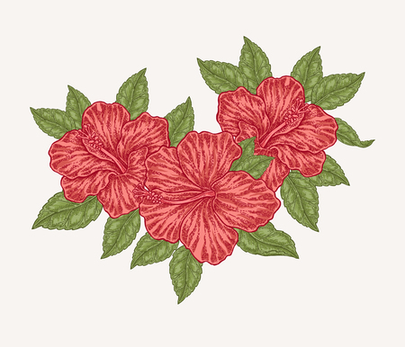 Red hibiscus flowers and leaves. Hand drawn botanical vector illustration engraved. Floral composition. 矢量图像