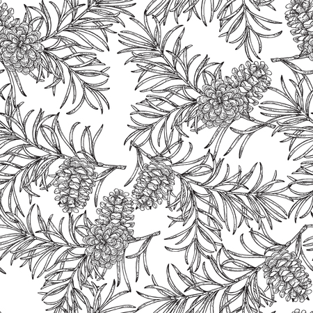 Seamless pattern with hand drawn pine cones and branches. Vector illustration engraved. Design for Christmas greeting cards and packaging. Ilustração