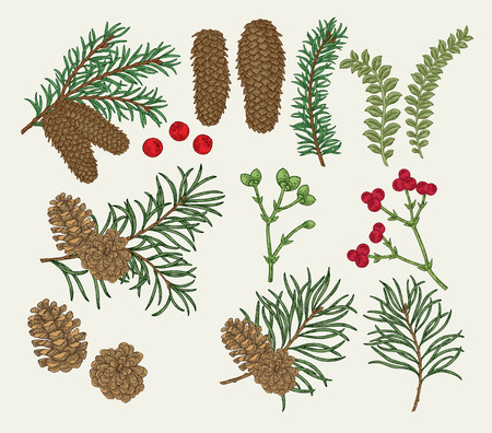 Hand drawn christmas plants. Pine, spruse, fir, boxwood branches and cones, winter berries set. Vector botanical illustration engraved.
