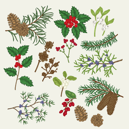 Hand drawn christmas plants. Holly, mistletoe,pine, spruse, juniper, barberry, snowberry, branches and cones, winter berries set. Vector botanical illustration engraved. 矢量图像