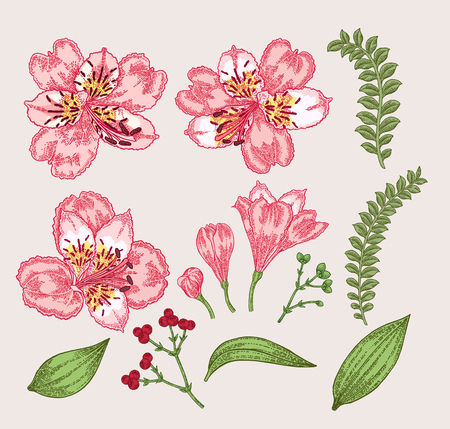 Spring flowers set. Hand drawn alstroemeria flowers and leaves. Vintage vector botanical illustration.