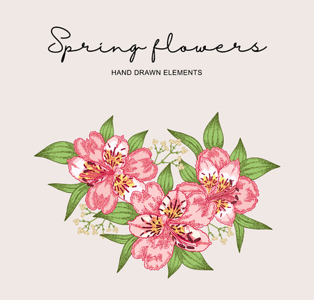 Spring flowers composition. Hand drawn alstroemeria flowers and leaves. Vintage vector botanical illustration.