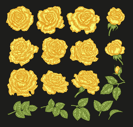Yellow roses vector illustration. Hand drawn flowers and leaves. Floral design elements.