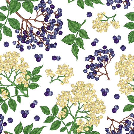 Elderberry and elderflower seamless pattern. Hand drawn sambucus flowers, leaves and berries. Vector illustration vintage. 免版税图像 - 121948052