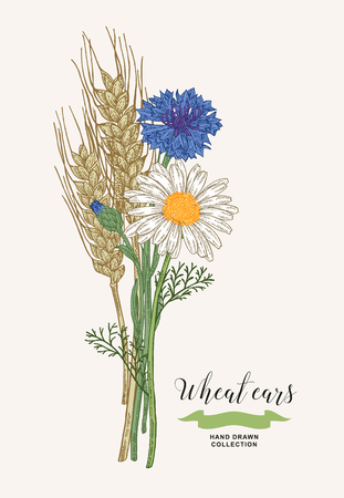 Wheat ears with chamomile and cornflowers. Rustic bouquet plants of fields. Hand drawn vector illustration. 免版税图像 - 120562678