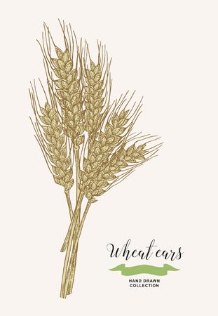Wheat ears. Rustic bouquet design. Hand drawn vector illustration. 免版税图像 - 120562677