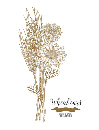 Wheat, chamomiles and cornflowers bouquet. Hand drawn vector illustration vintage.