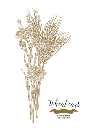 Wheat ears and cornflowers bouquet. Hand drawn vector illustration vintage. 矢量图像
