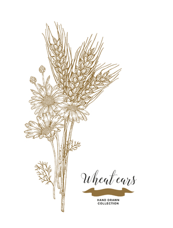 Wheat ears and chamomiles bouquet. Hand drawn vector illustration vintage. 矢量图像