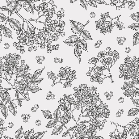 Holunderbeere und Holunderblüten nahtloses Muster. Handgezeichnete Sambucus-Blumen, Blätter und Beeren. Vektorillustrationsweinlese.