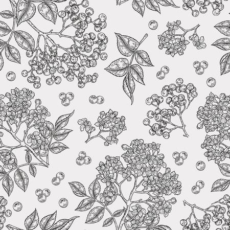 Modello senza cuciture di sambuco e fiori di sambuco. Fiori, foglie e bacche di sambucus disegnati a mano. Annata di illustrazione vettoriale.