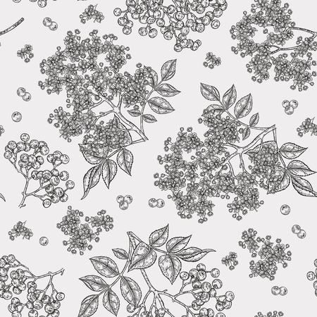 Elderberry and elderflower seamless pattern. Hand drawn sambucus flowers, leaves and berries. Vector illustration vintage. Banque d'images - 121948057