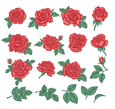 Collection of red roses. Rose flowers, leaves and buds isolated on white background. Hand drawn vector illustration. Floral design elements.