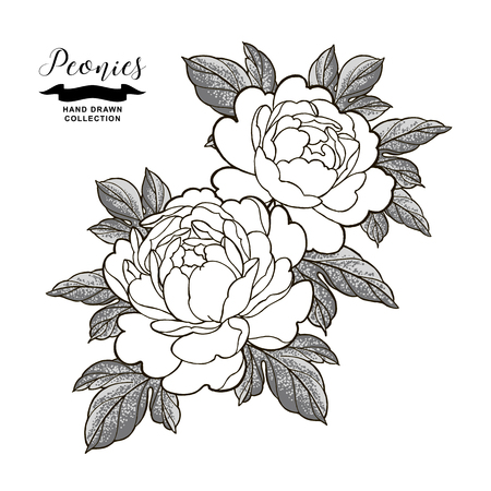 Peony flowers and leaves in japanese tattoo style. Hand drawn flowers isolated on white background. Floral elements vector illustration. Ilustração