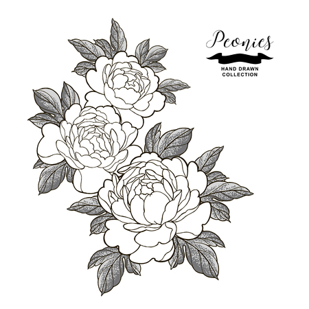 Peony flowers composition in japanese tattoo style. Hand drawn flowers isolated on white background. Floral elements vector illustration.