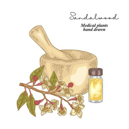 Sandalwood essential oil. Medical herbs set. Vector illustration hand drawn. Ilustração