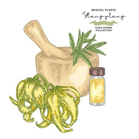 Ylang-ylang essential oil. Medical plants set. Vector illustration hand drawn.