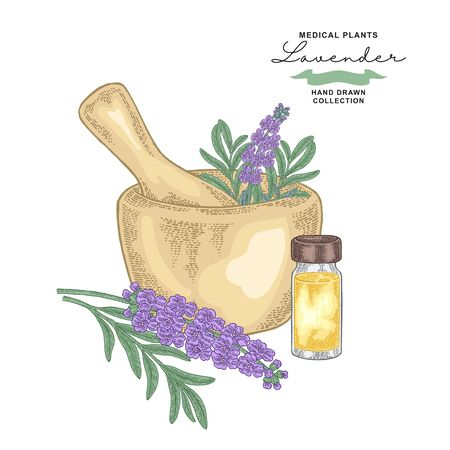 Lavender flowers and glass bottle with essential oil. Medical plants set. Vector illustration hand drawn.