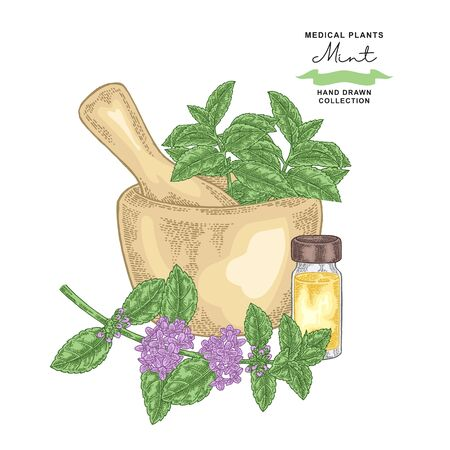 Pepper mint flowers and leaves.Medical plants set. Vector illustration hand drawn. 免版税图像 - 131750735