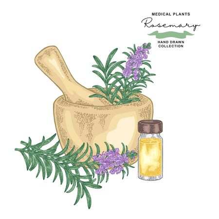 Rosemary flowers and leaves. Medical plants set. Vector illustration hand drawn.