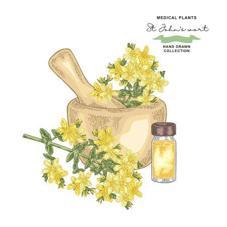 Tutsan flowers and leaves. St Johns wort essential oil. Medical plants set. Vector illustration hand drawn.