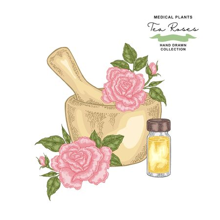 Tea rose flowers and leaves. Roses essential oil. Medical plants set. Vector illustration hand drawn. Ilustração