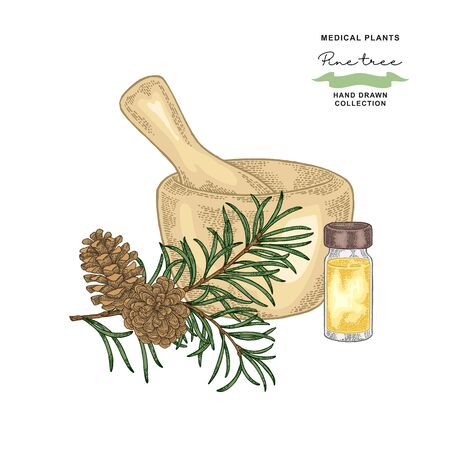 Pine tree branch with cones. Medical plants set. Vector illustration hand drawn.