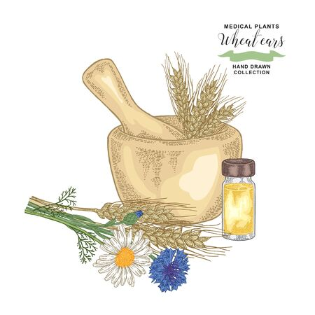 Wheat ears with cornflowers and chamomiles. Medical plants set. Vector illustration hand drawn.