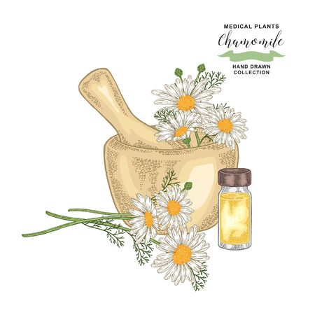 Chamomile flowes and leaves. Medical plants set. Vector illustration hand drawn.