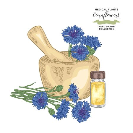 Cornflowers with mortar and glass bottle of essential oil. Medical herbs. Botanical vector illustration.