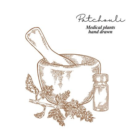 Patchouli branch. Medical plants set. Vector illustration hand drawn.