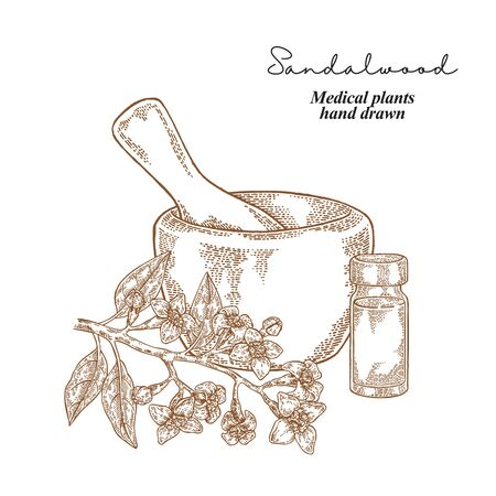 Sandalwood branch with flowers and leaves. Medical plants set. Vector illustration hand drawn.