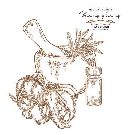 Ylang-ylang flowers. Medical plants set. Vector illustration hand drawn.