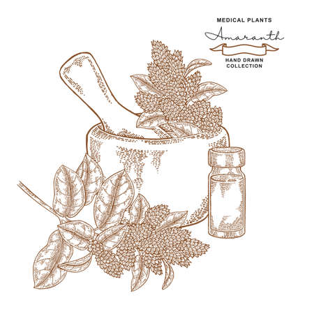 Amaranth flowers and leaves. Medical plants set. Vector illustration hand drawn.
