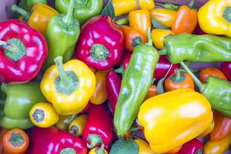 Colorful Pepper varieties; Bell pepper, bitter pepper, Fresh vegetables