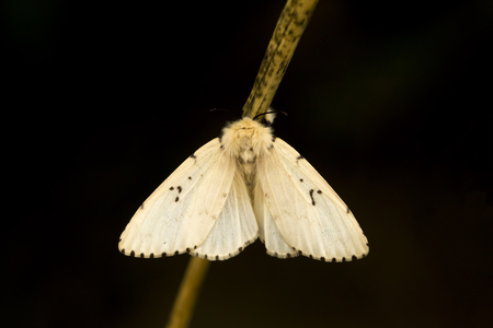 metamorphosis: A beautiful butterfly