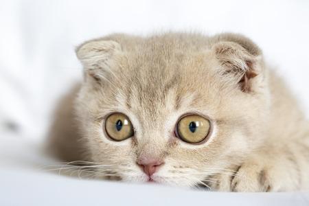 pete: The Cute Kitten Cat, baby cat meow Stock Photo
