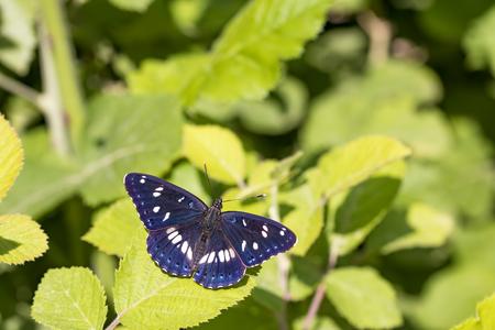 El escarabajo de la mariposa en la vida natural de la naturaleza Foto de archivo - 82109053