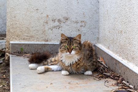 Stray cat alone, long hair tabby cat