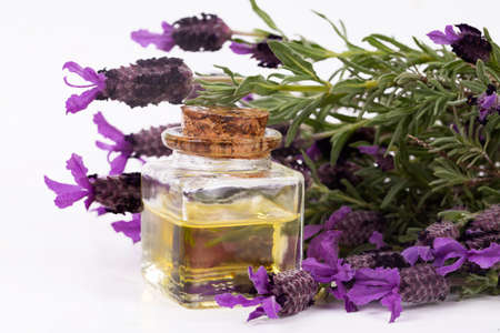 Lavandula Stoechas (French lavender; Spanish Lavender; Topped Lavender); isolated on white Stock Photo