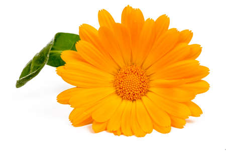 Calendula officinalis Marigold flower with leaf isolated Stok Fotoğraf