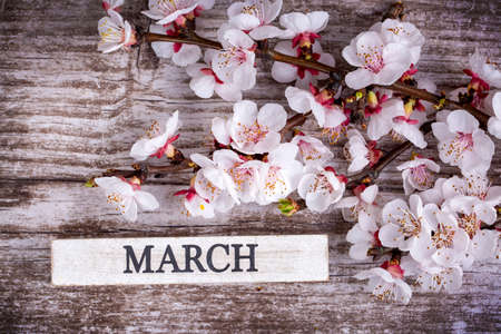 Apricot tree blossom and march write on the wooden background 스톡 콘텐츠